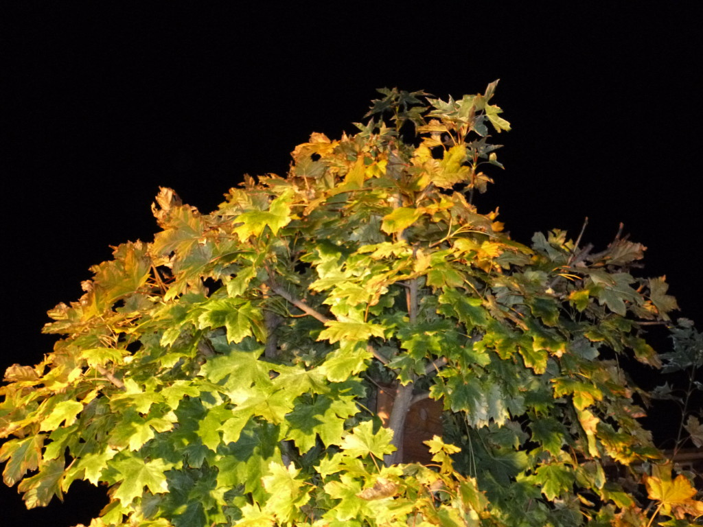 Autumn At Night