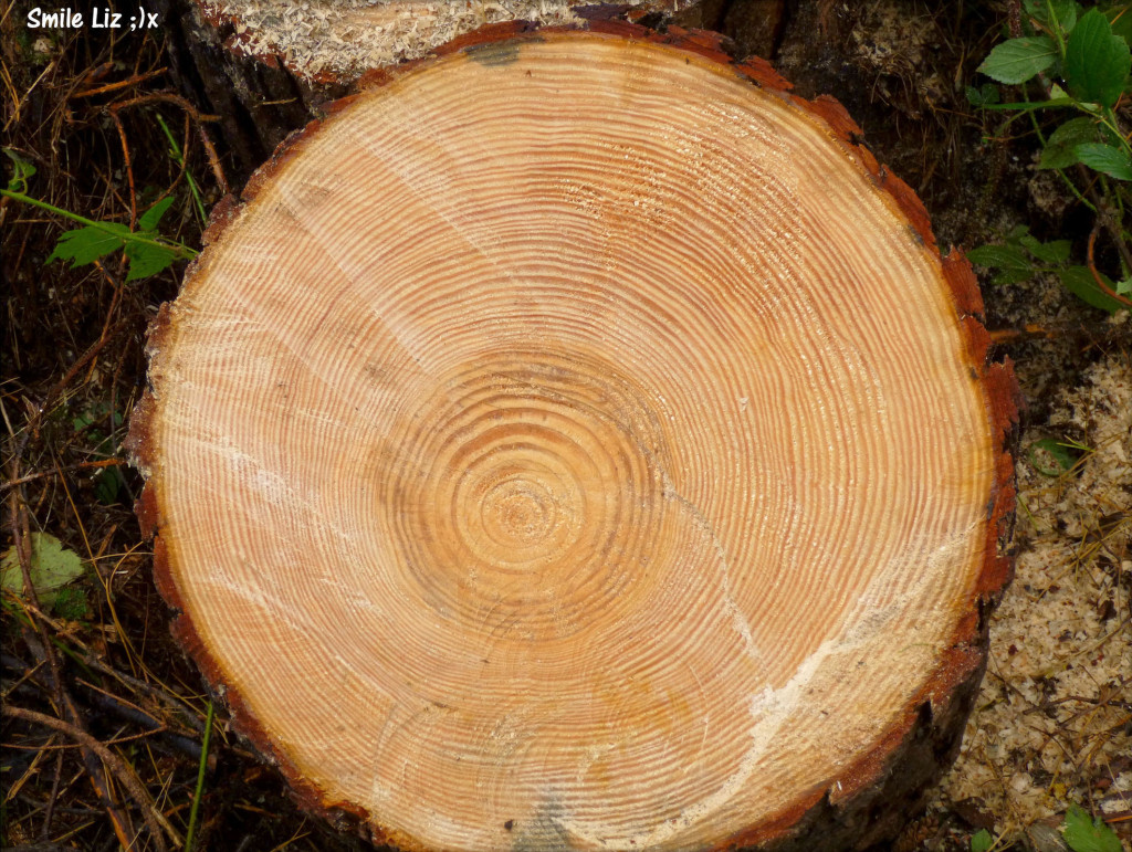 Log, Growth Rings On A Log, Tree Stump,