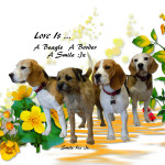 A Beagle A Border A Smile aa