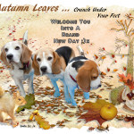 Autumn Leaves Crunch Under Your Feet
