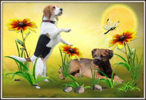 beagle and border terrier photo design sun