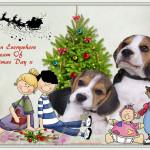 Children Dream Of Christmas