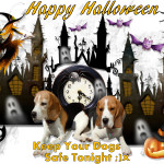 Happy Halloween Keep Your Dogs Safe