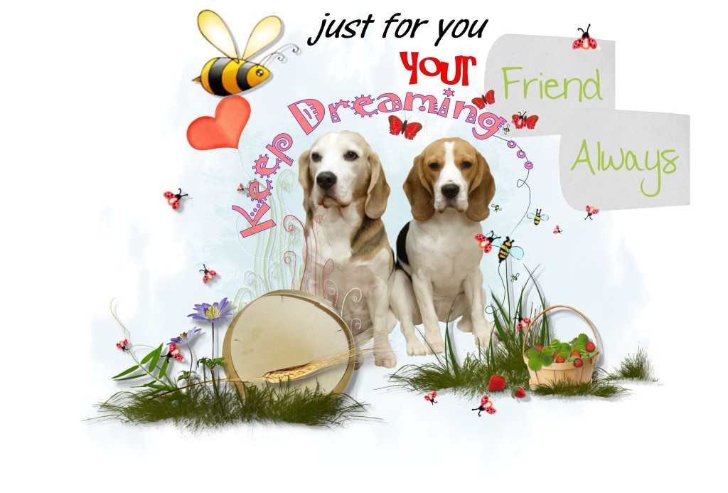 Beagle Design With Words, Beautiful Beagle Dogs With Words, Making Moments Design,