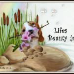 Lifes Beauty