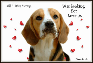 Beagle Design With Words, Quote and A Beagle,