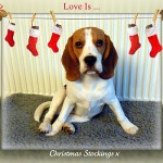Love Is ... Christmas Stockings x