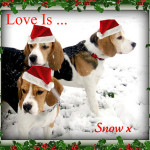 Love Is ... Snow