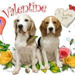 My Valentine xxxxx