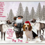 Santa's Reindeer's Big Day
