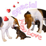 Special New Love
