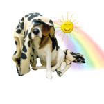 Sunshine Undercover