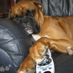 boxer dog sofa tv controller funny