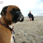 boxerdog on beach