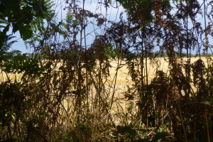 Autumn, Photograph View, Hedgerow,