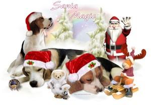 16 AA Santa Magic aa